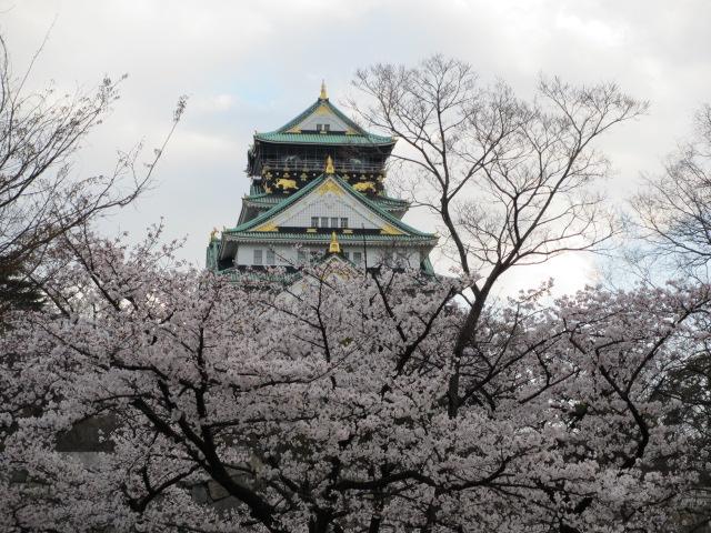 大阪城公園 桜と天守閣
