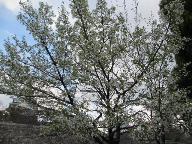 大阪城公園 内濠沿い6