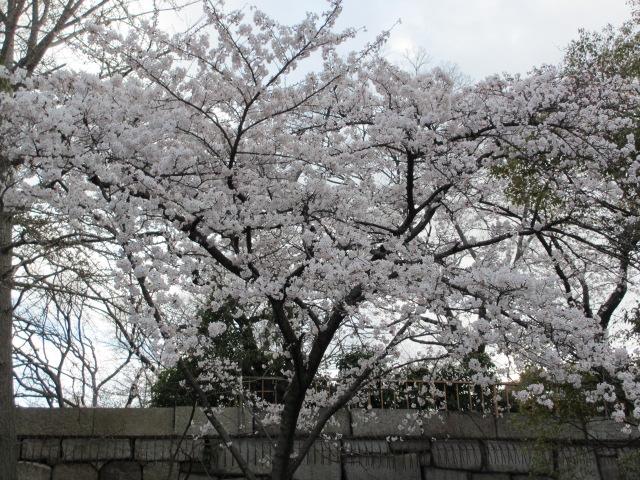 大阪城公園 内濠沿い10