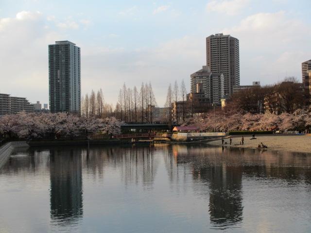 毛馬桜之宮公園 大川2