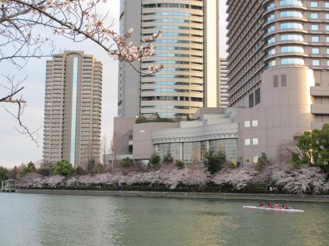 毛馬桜之宮公園 大川5