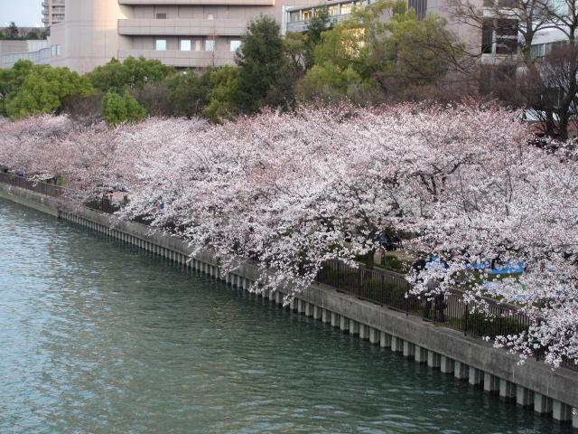 毛馬桜之宮公園 源八橋からの景色3
