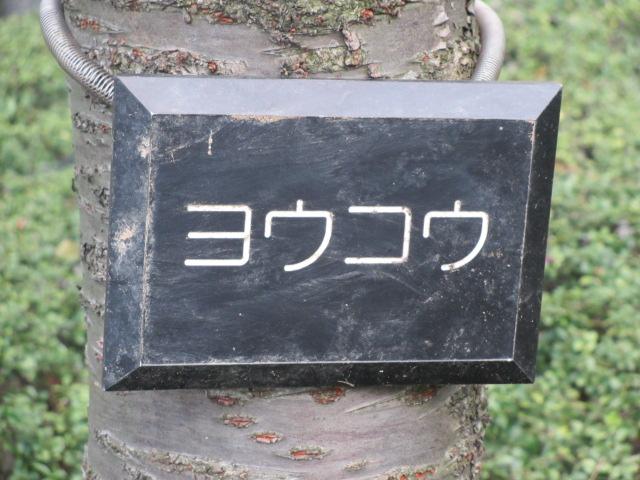 毛馬桜之宮公園 ヨウコウ2