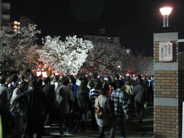 造幣局の桜の通り抜け2