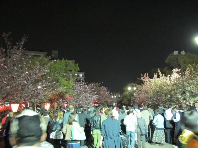 造幣局の桜の通り抜け3