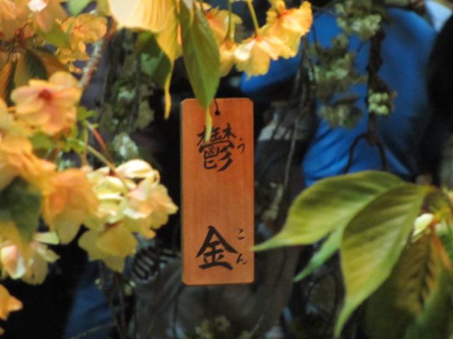 造幣局の桜の通り抜け「欝金」