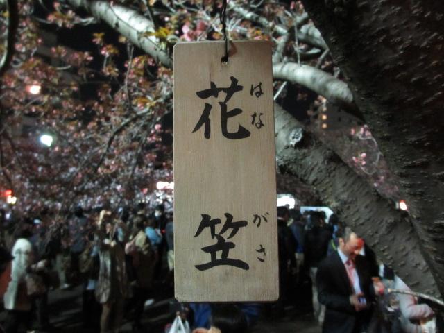 造幣局の桜の通り抜け「花笠」