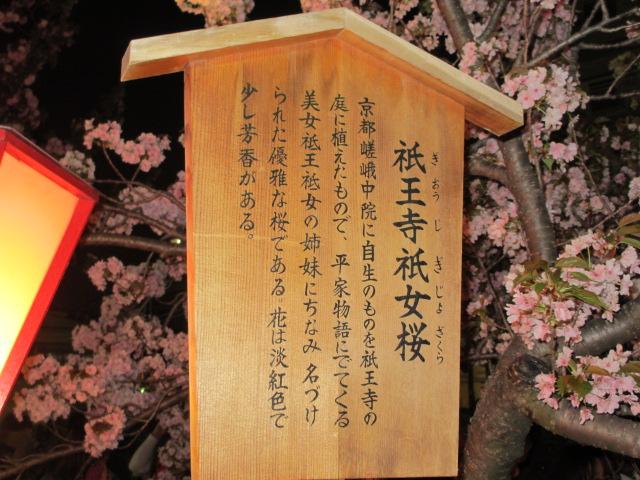 造幣局の桜の通り抜け「祇王寺祇女桜」
