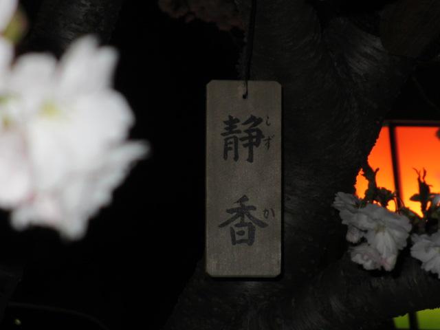 造幣局の桜の通り抜け「静香」