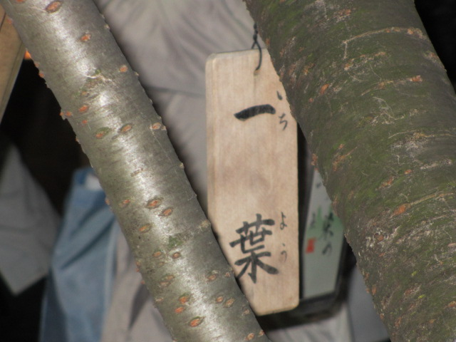 造幣局の桜の通り抜け「一葉」4