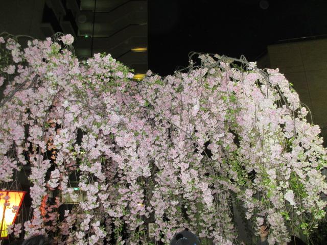 造幣局の桜の通り抜け「雨情枝垂」2
