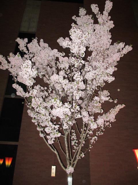 造幣局の桜の通り抜け「思川」2