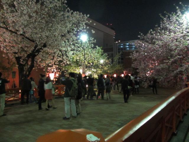 造幣局の桜の通り抜け7