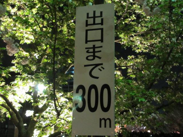 造幣局の桜の通り抜け8