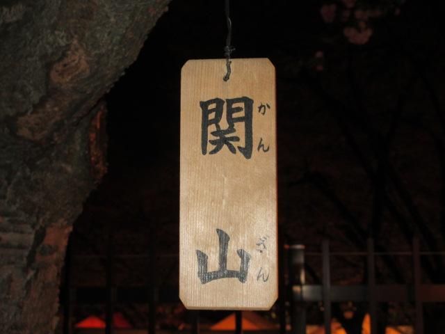 造幣局の桜の通り抜け「関山」10