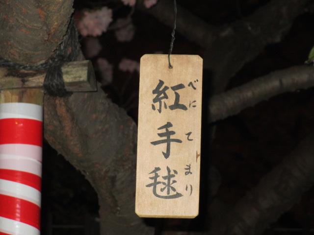 造幣局の桜の通り抜け「紅手毬」