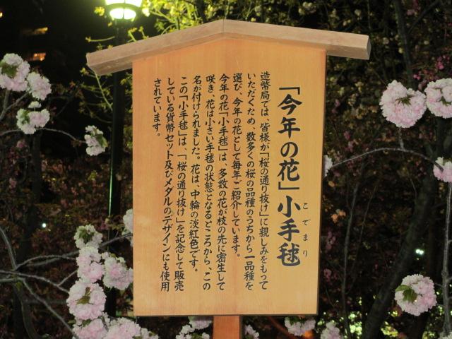 造幣局の桜の通り抜け「小手毬」6