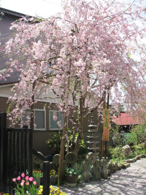 金峯山寺銅鳥居~金峯山寺(前の坊の桜)