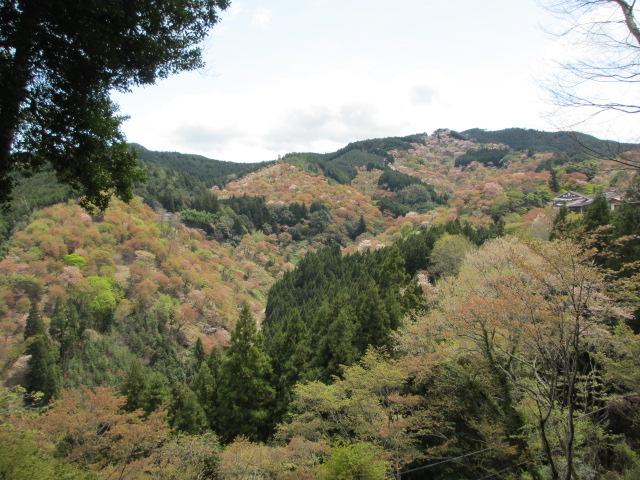 吉水神社(一目千本)2