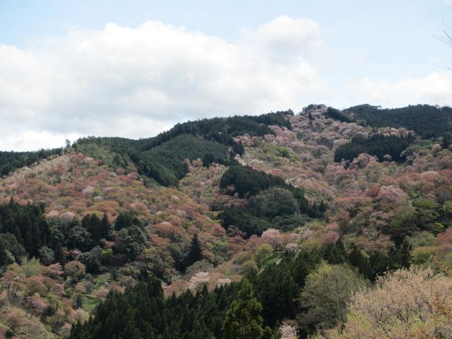 吉水神社(一目千本)3