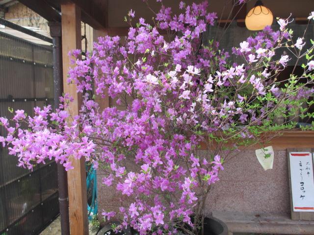 吉水神社~桜本坊6