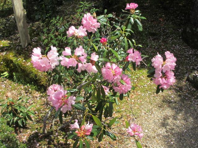 竹林院群芳園7