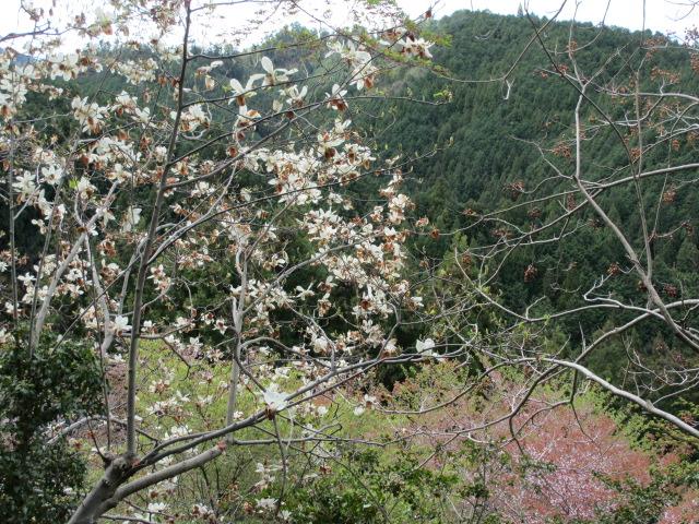 竹林院群芳園12