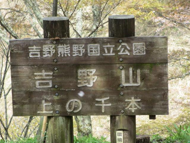 上千本の桜5