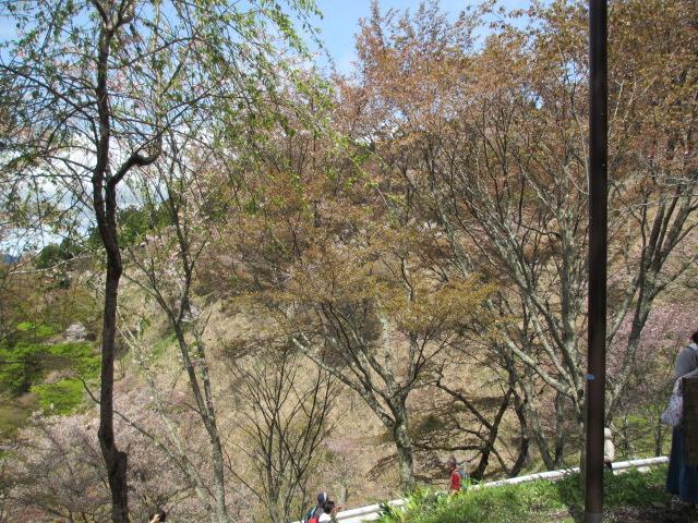 上千本の桜6