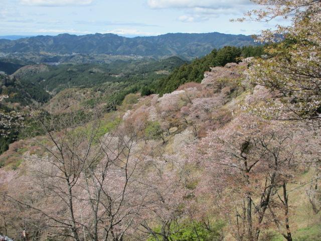 上千本の桜12