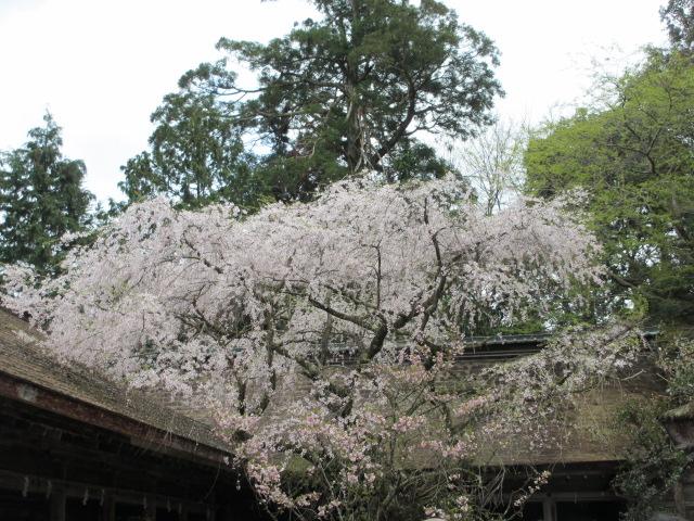 吉野水分神社6