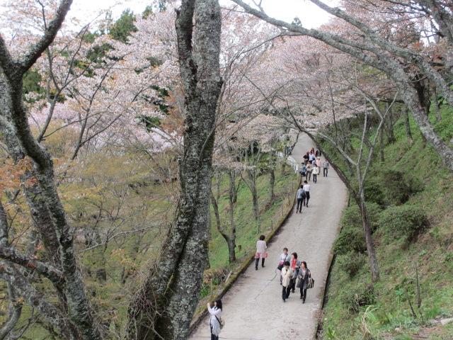 上千本の桜8