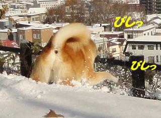 bishi_20111118134015.jpg