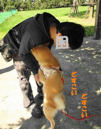 dosukoi_20110929173410.jpg