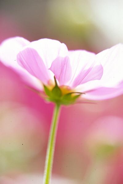 花の文化園0005