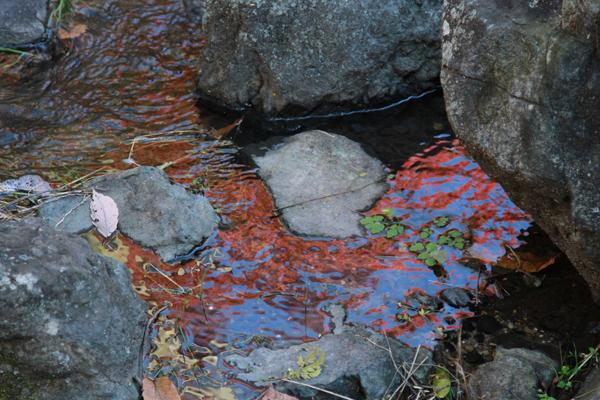 山田池の紅葉1