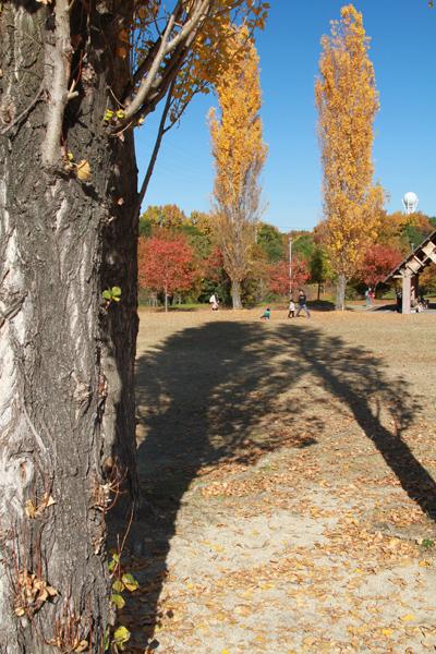 山田池の紅葉3