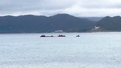 今日の鯨浜4