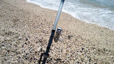 今朝の釣果2