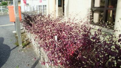 赤尾木郵便局2