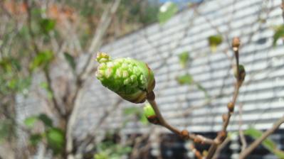 春の息吹2