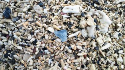 浜辺の宝物1