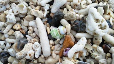 浜辺の宝物2