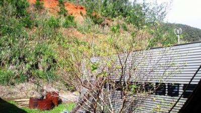 春の息吹=桑の木編3