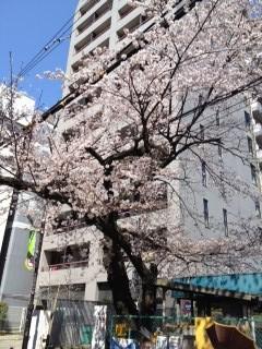sakira1__.jpg