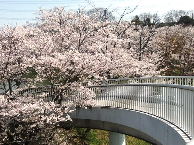 桜ループ橋
