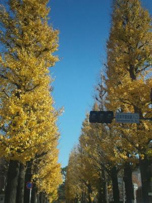 紅葉のイチョウ並木