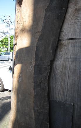 大きな桐の木を分厚く挽き割った桐の盤