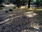 新宿御苑の枯葉