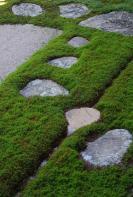 蓮乗院の苔